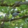 野鳥の撮影を始めて4か月。春になって気づいたこと