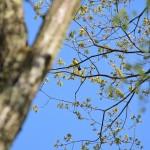 里山で人生初の野鳥撮影に挑む。数分後、驚愕の事実を知ることになる