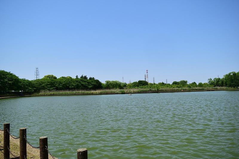 県民健康福祉村  お池