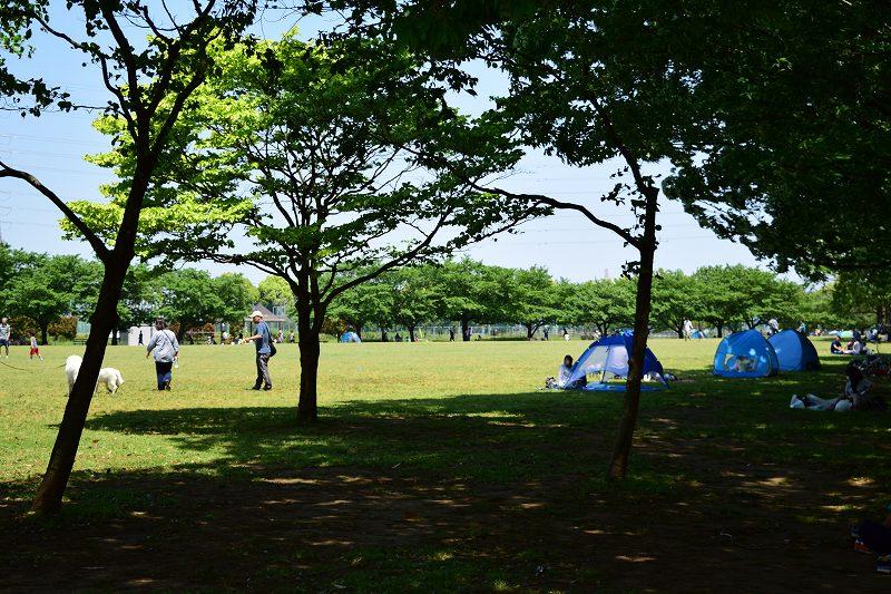 県民健康福祉村 多目的大芝生広場