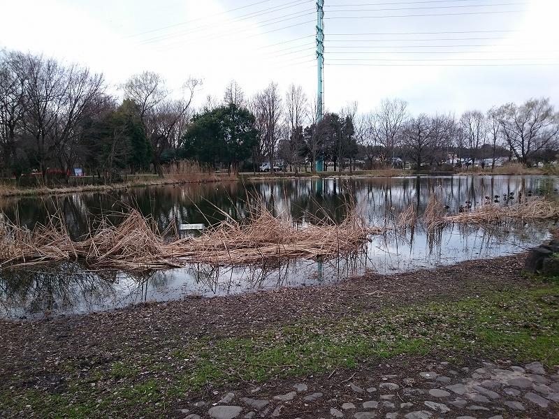 見沼自然公園 修景池