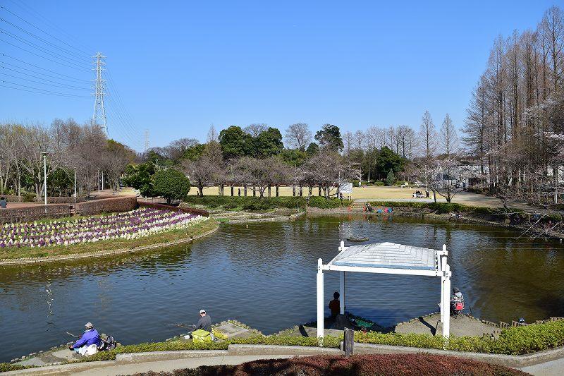 サギヤマ記念公園 お池