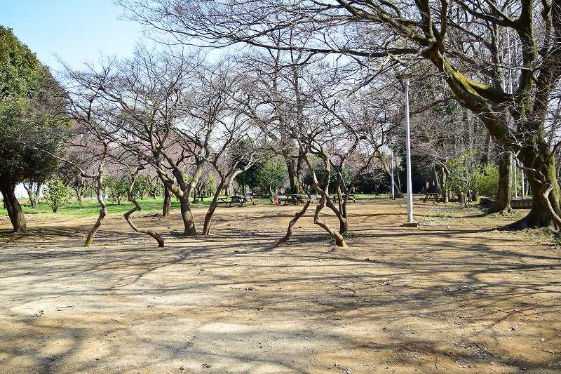 サギヤマ記念公園 青少年野外活動センター