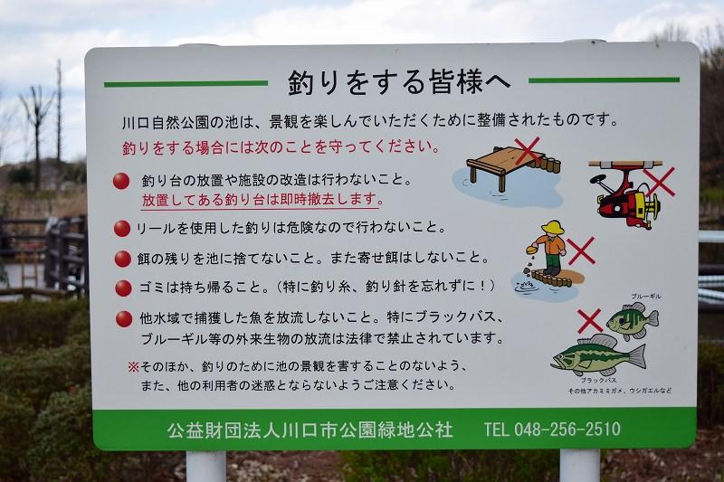 川口自然公園 釣りができる池