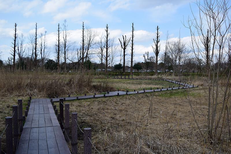 川口自然公園 ビオトープと木道