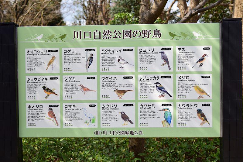 川口自然公園 野鳥観察の看板