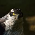 「Nikon 55-300㎜ ズームレンズ」で動物撮影を試みる。カメラ初心者の参考になるか?