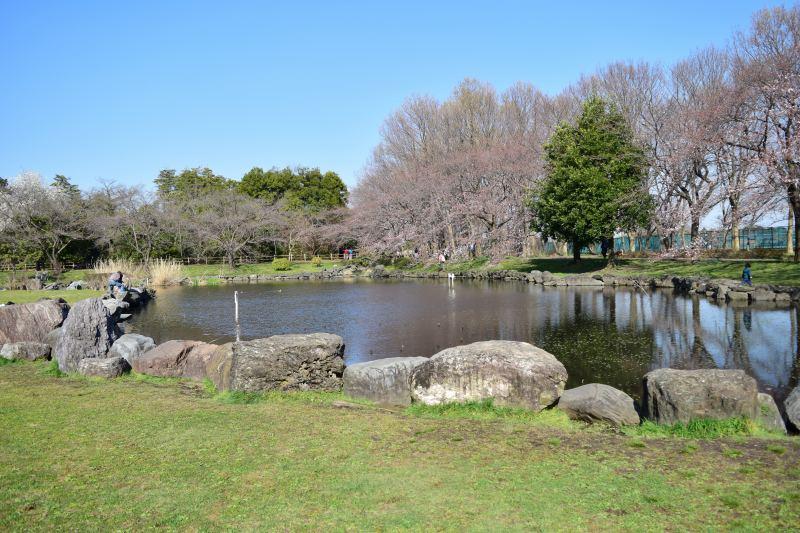 見沼氷川公園 大きな池