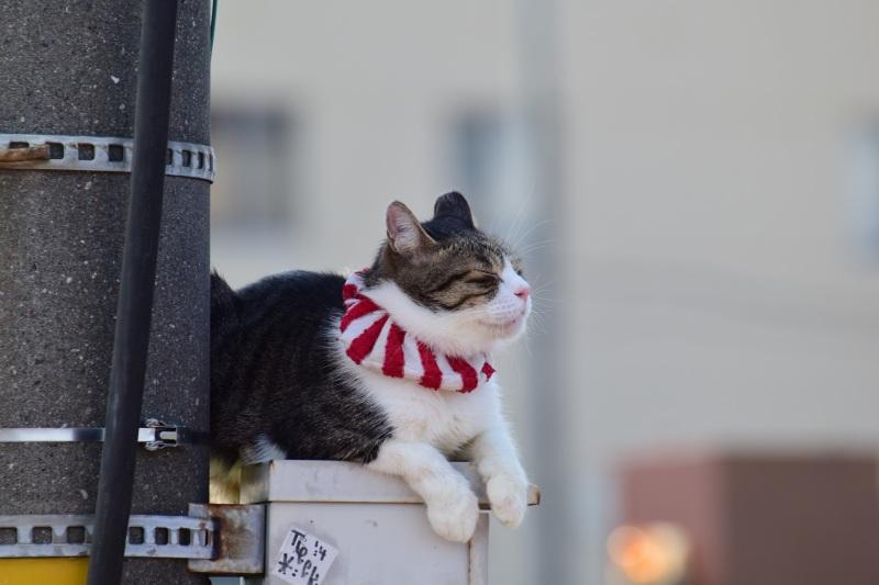 横田基地日米友好祭 アイドル猫