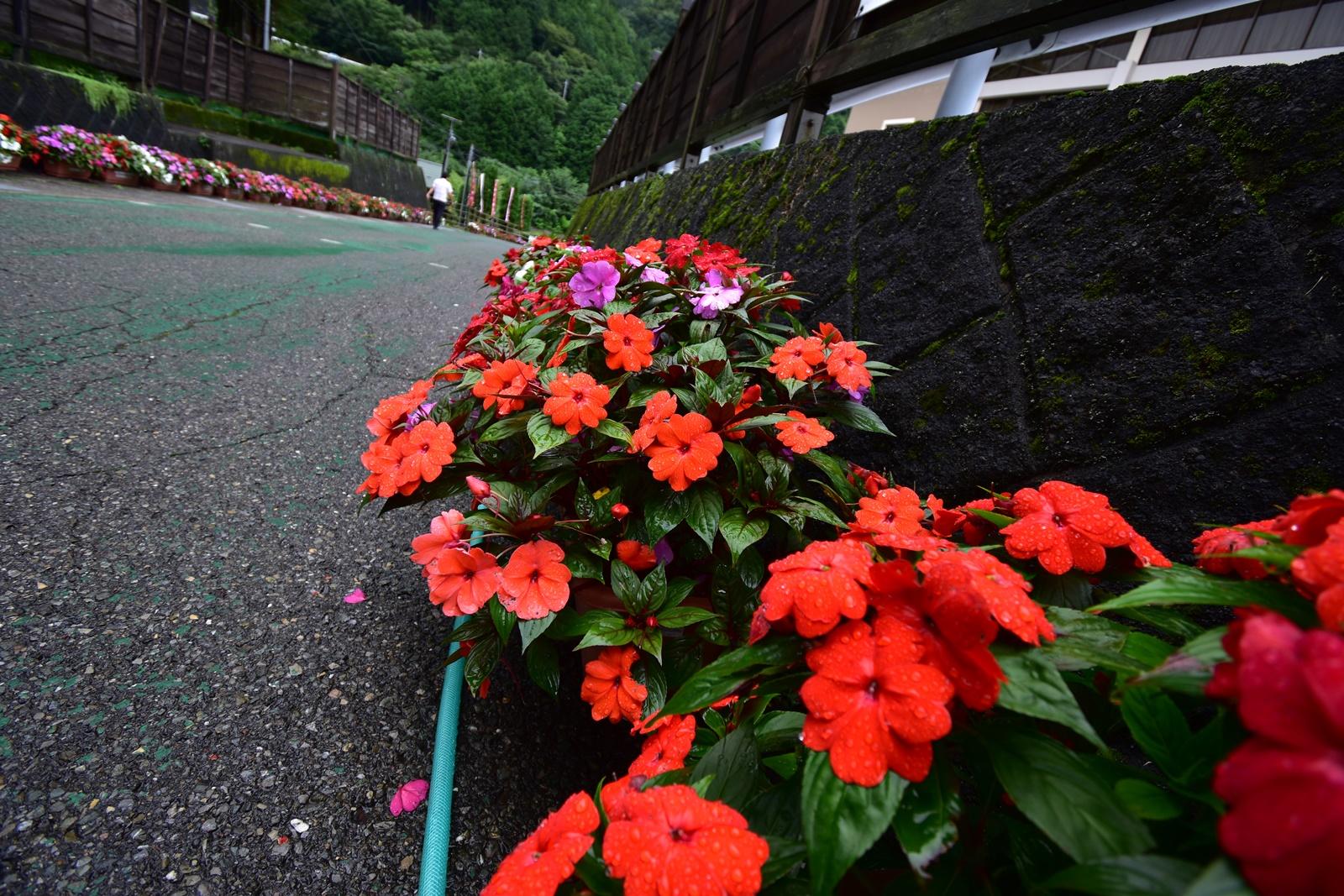 足尾銅山観光に咲いていた花